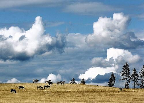 idaho-landscape.jpg
