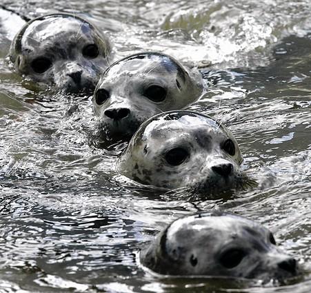 otter-heads.jpg