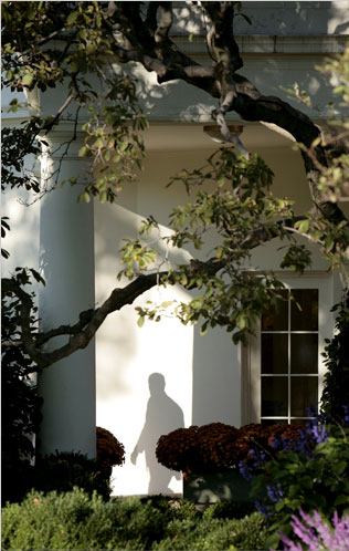 bush-shadow.png