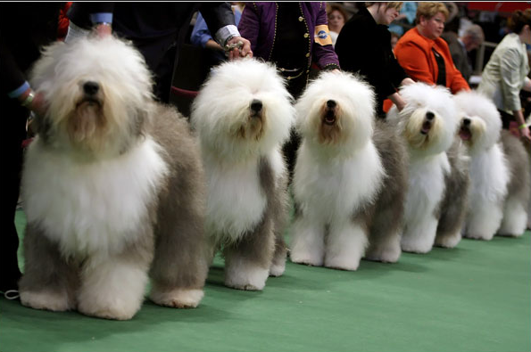 and so we get to the dog show