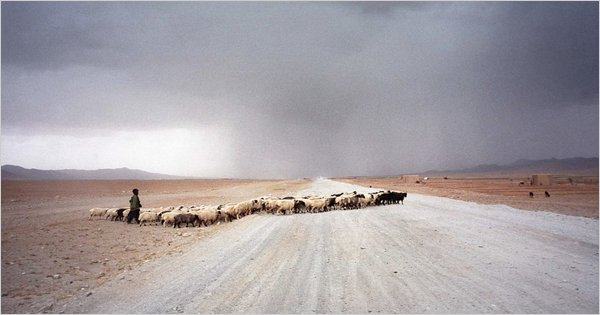 Afghanistan sheep, Tyler Hicks